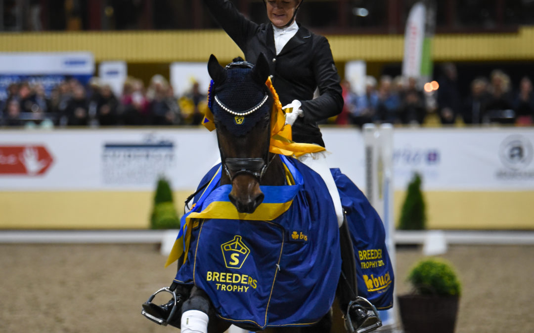 SWB Equestrian Weeks