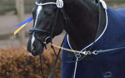 Placeringar för två SWB-hästar i unghäst-VM i Zangersheide