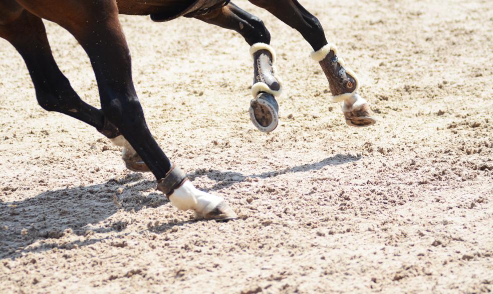 Talent meets talent – Den hållbara hästen