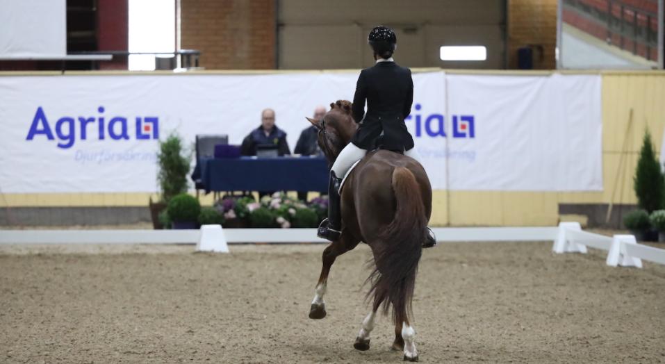 SWB Equestrian Weeks öppnar upp för äldre hästar